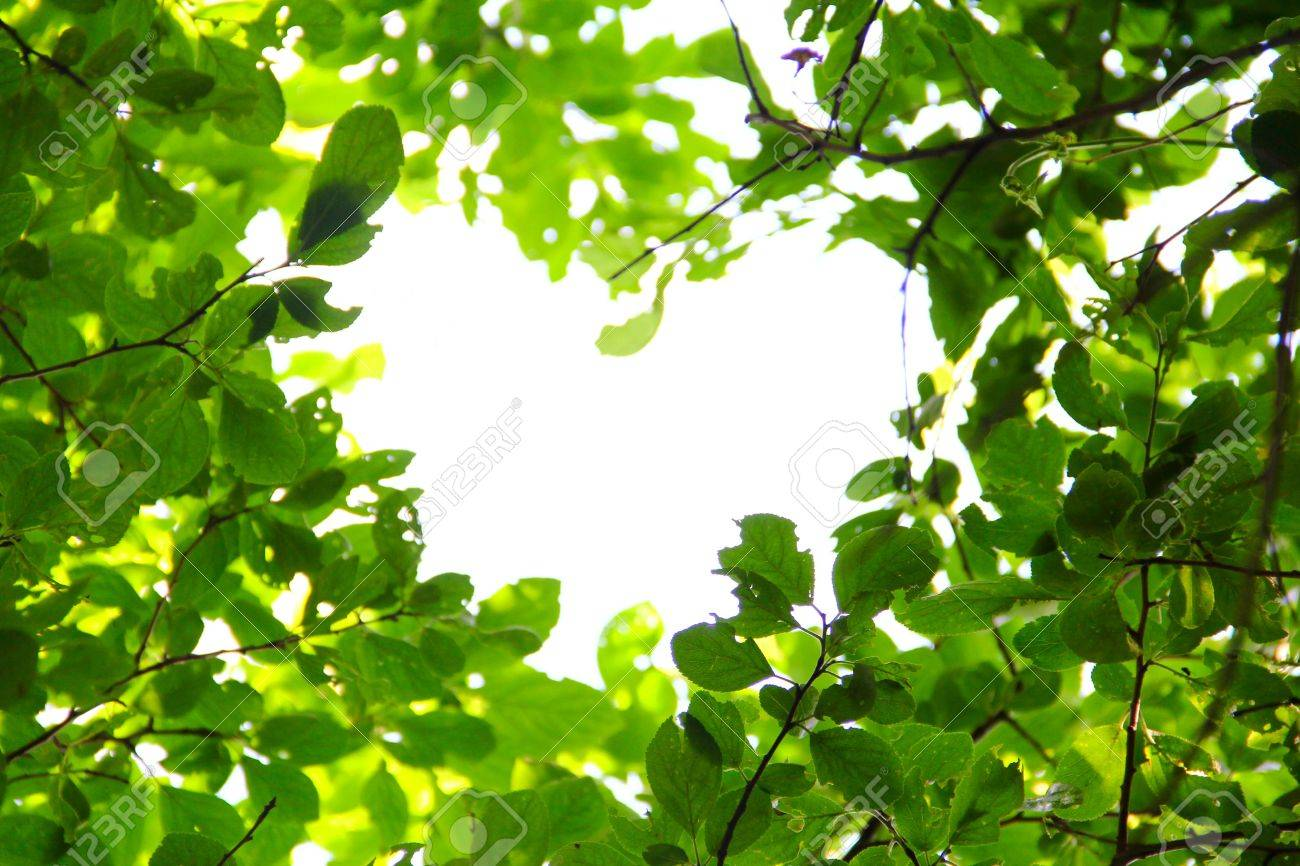 14436921-beautiful-leaves-background-love-nature-concept